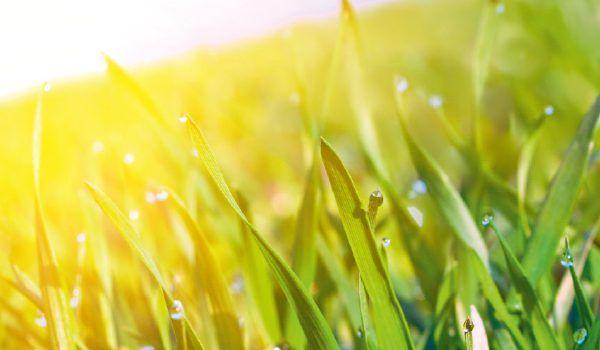 vanabeelen_solarfridge_koelcontainer-op-zonne-energie_gras